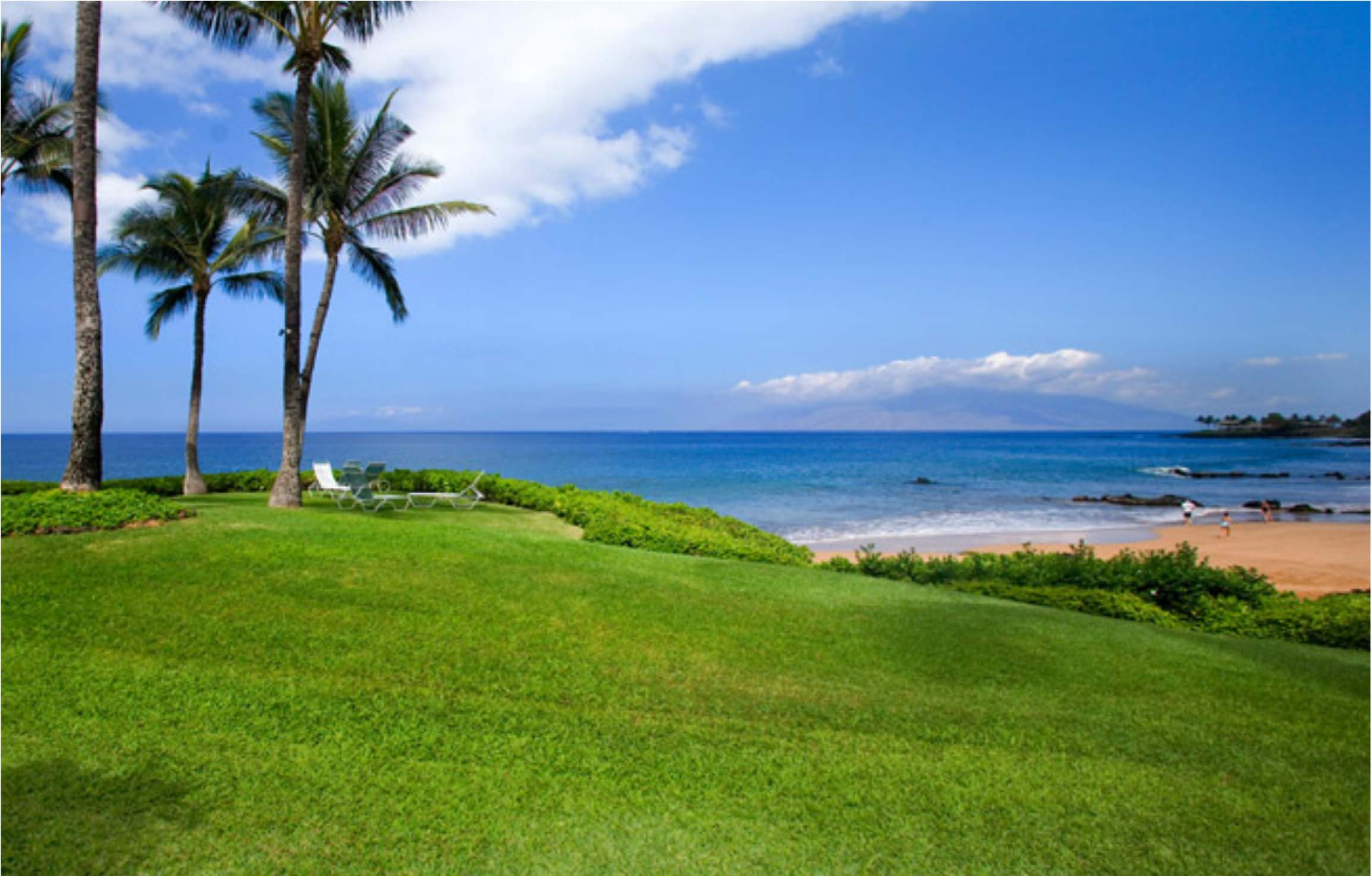 Oceanfront view and lawn