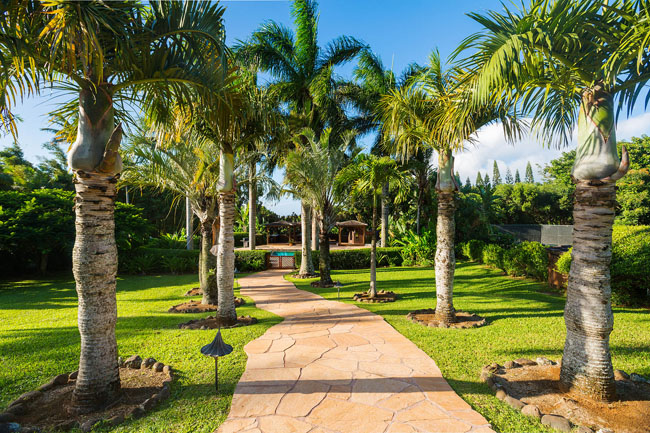Palm lined pathway to pool